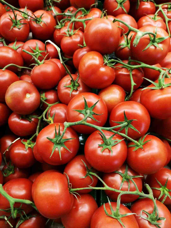 Comment planter les tomates