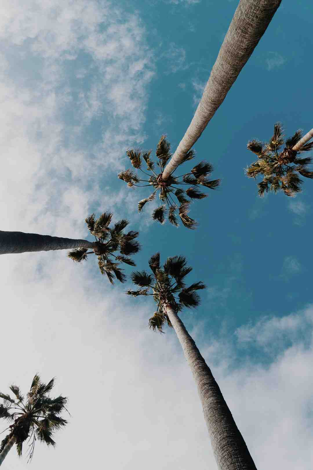 Comment dessiner un palmier